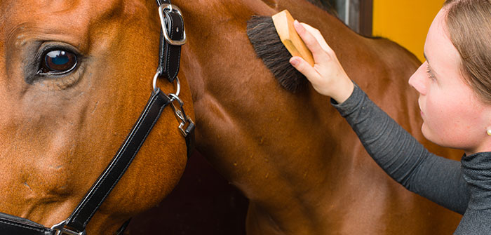 Pferdepflege Produkte