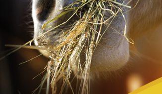 Der Horse-Gate Futterkalender powered by JOSERA