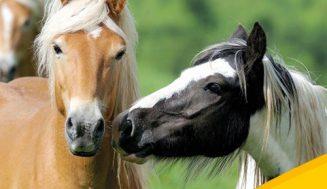 Thema im Juli: Fütterungsbedingte Stoffwechselstörungen bei Pferden