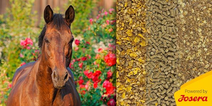 Alte Pferde füttern