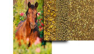 Thema im September: Alte Pferde füttern