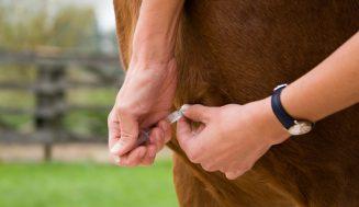 Impfen von Pferden als wichtige Prävention