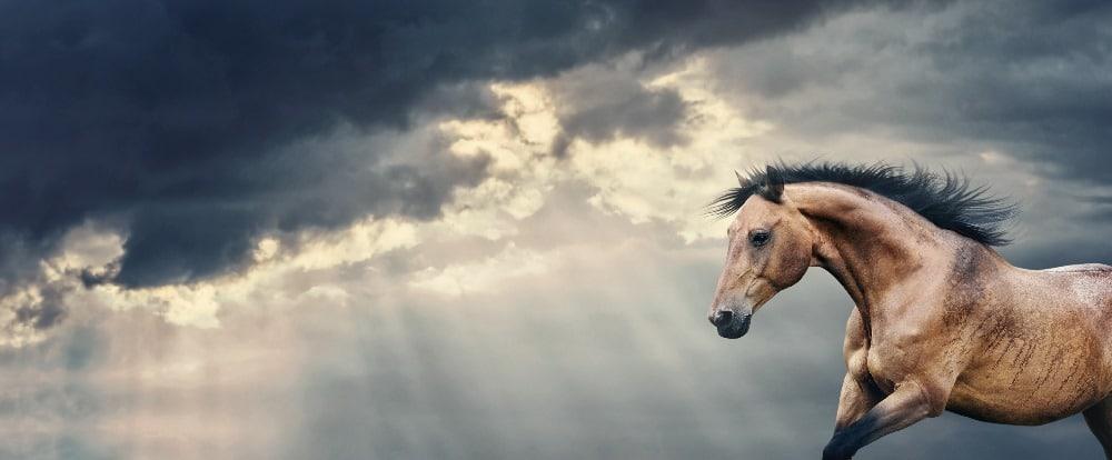 """Wetterfühligkeit bei Pferden – Gibt es das """"Kolikwetter"""" wirklich?"""