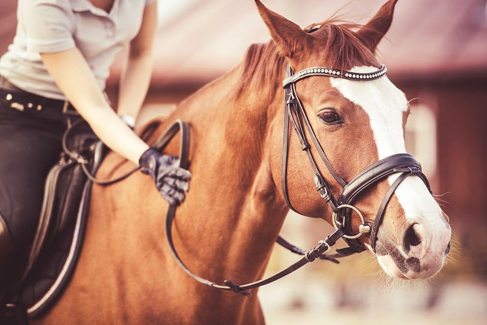 Neues aus dem Hengstbuch – Tiergerecht in Pferdezucht und Pferdesport