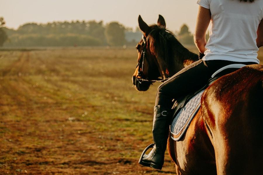 Streitthema Reitergewicht: Was ist das Maximum?