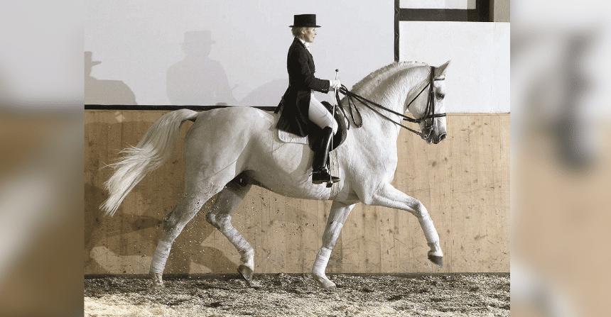 Holsteiner Stamm 5421 – Legendärer Mutterstamm – Teil 1