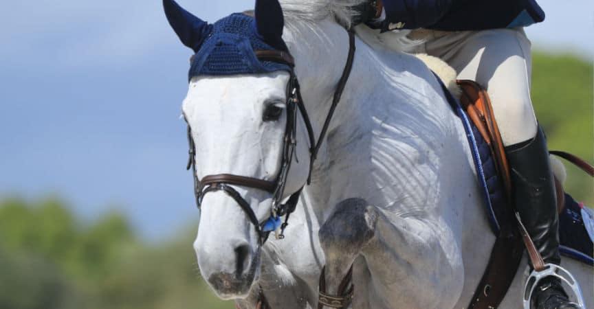 Bundeschampionate: Spring- und Vielseitigkeitspferde und -ponys