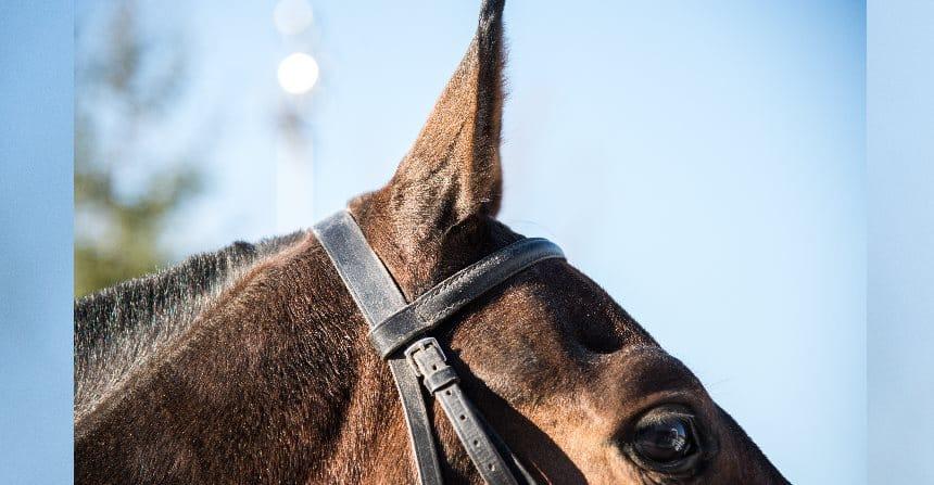 Verkaufspferde vermarkten – gewusst wie