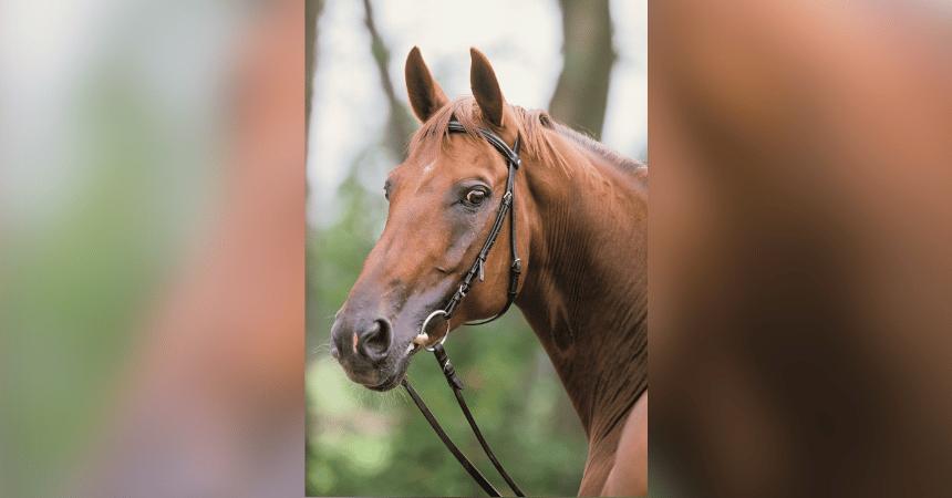 Breitling – Ein S-Pferd nach dem anderen (Teil 1)