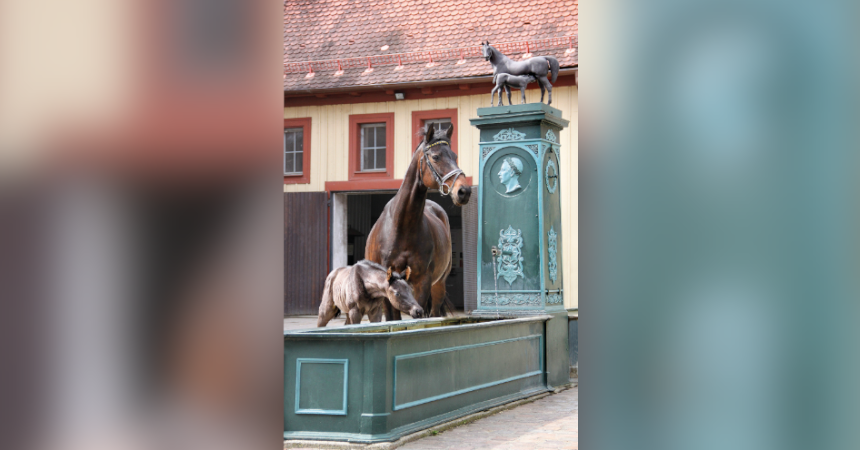 500 Jahre Zuchtgeschichte in Marbach (Teil 1)