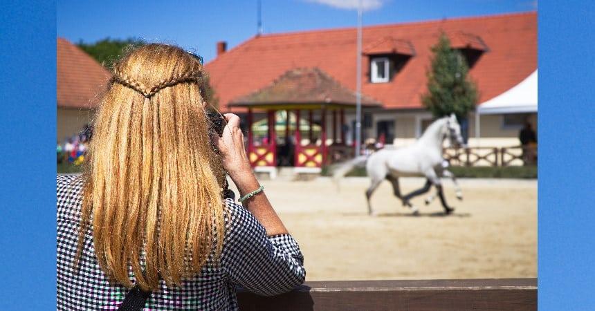 Pferde fotografieren– gewusst wie