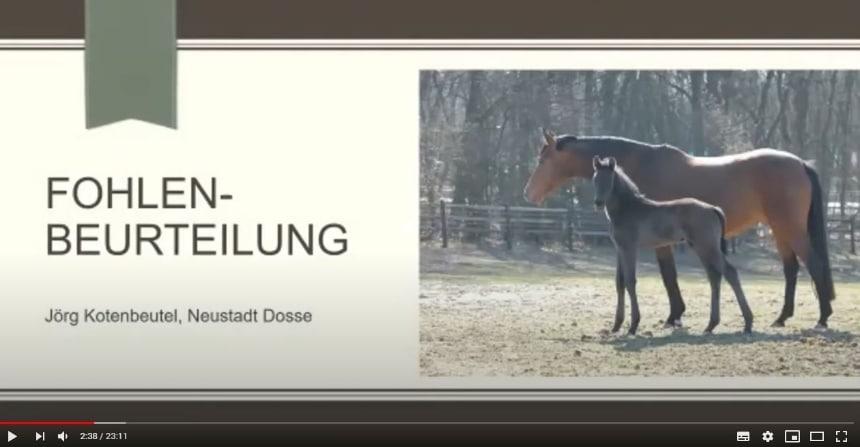 Geschützt: Video Züchterwissen Fohlenbeurteilung