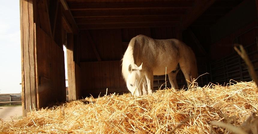 Gutes Stallklima, gesunde Pferde