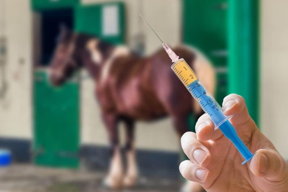 Hygienemanagement: Entwurmen & Impfen