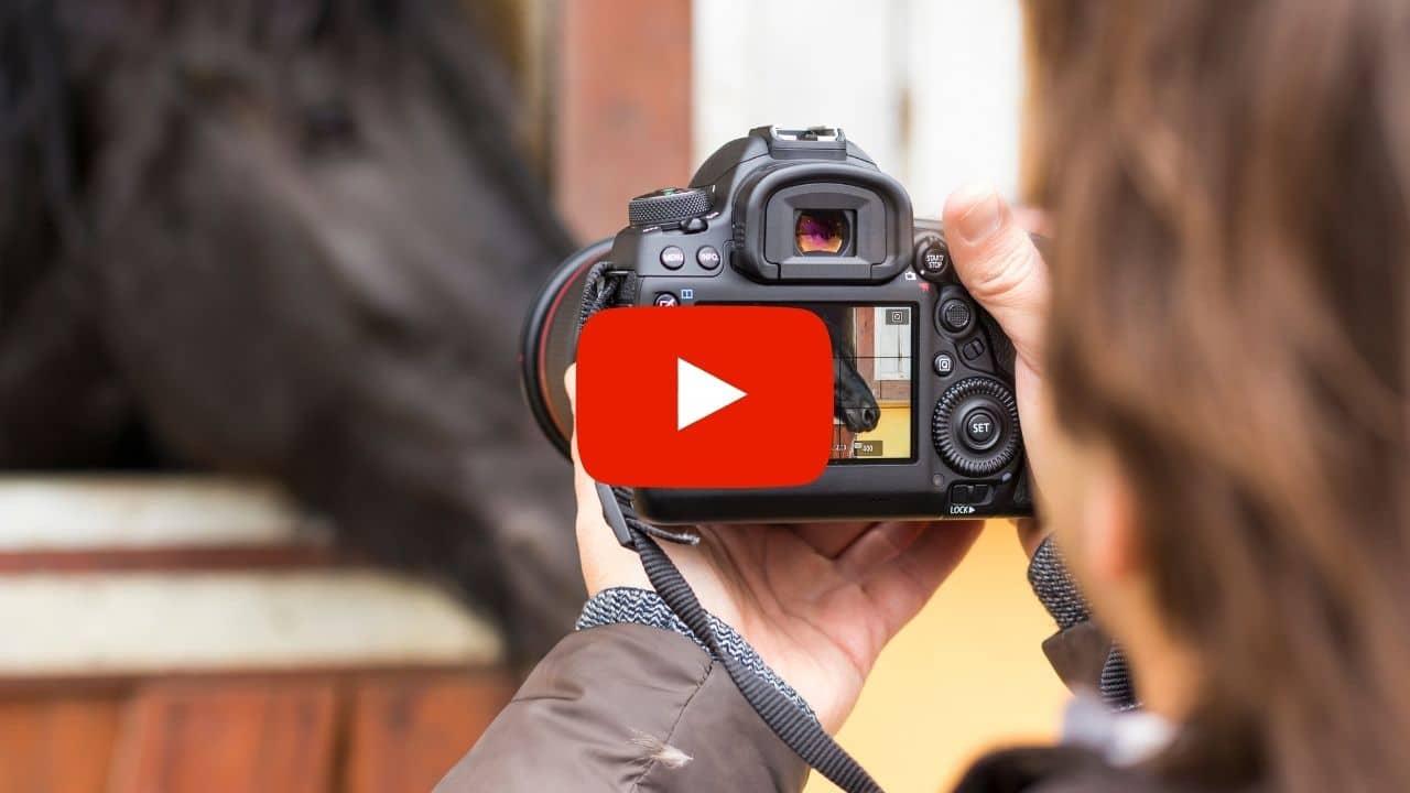 Video: Pferde fotografieren wie ein Profi