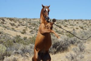 Der Einsatz von Globulis bei schwierigen Pferden ist in vielen Fällen hilfreich.